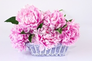 11852061-basket-of-pink-peonies-on-gray-background